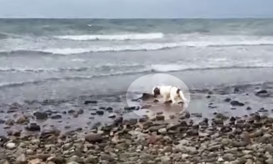 Dog Won't Stop Barking and Nudging Owner at Beach, Stunned When He Finds Out Why