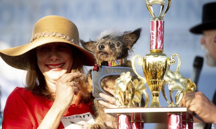 Scamp the Tramp is held by Darlene Wright after winning the World's Ugliest Dog Contest at the Sonoma-Marin Fair in Petaluma, Calif., on June 21, 2019. (Noah Berger/AP Photo)