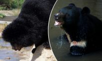 Man Claims the Puppy He Adopted Two Years Ago Grew Into a Bear