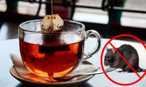 Keep Spiders and Mice Out of Your House, All You Need Is One Tea Bag