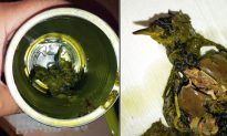 Pennsylvania Woman Surprised After Finding Dead Bird in Canned Vegetables