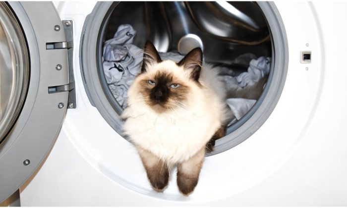 In this unrelated file image, a cat rests in the drum of a family washing machine. (Pixabay)