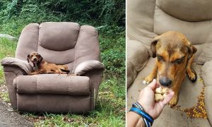 Puppy Found Abandoned on Roadside Armchair