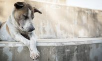 Stray Dog Is Buried Alive on Irked School Principal's Orders, Here's What Happened Next