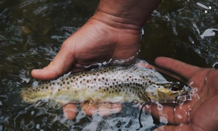 Stock photo showing a fisherman holding a trout in his hands. (Hunter Brumels/Unsplash)
