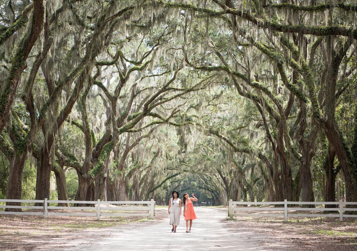 oak trees savannah