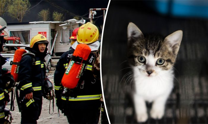 (L) Chinese firefighters. (STR/AFP/Getty Images) -- (R) A kitten in Shanghai, China. (Johannes Eisele/AFP/Getty Images)