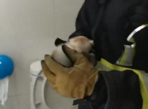Firefighter kitten ceiling