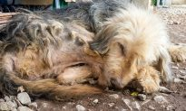 Tortured Dog Lay Lifeless on Road, Lifts Head When He Sees the Right Person Has Arrived