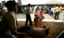 4 Cases of E. Coli Poisoning at San Diego County Fair, One Toddler Dead