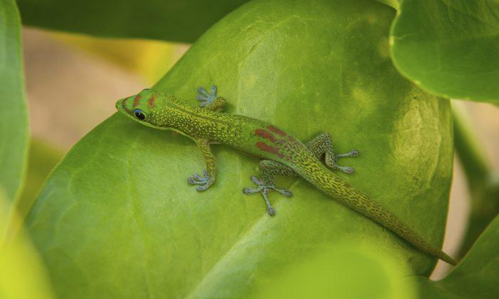 A lizard. (Scott Osborn/Unsplash)