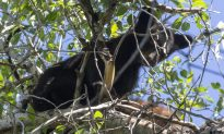 Colorado Resident's Act of Killing Mother Bear Was Legal, Say Authorities