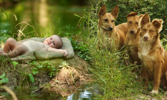 Stray Dogs Guard Baby Dumped in Bushes, Refuse to Leave Her Side Till Rescuers Arrive
