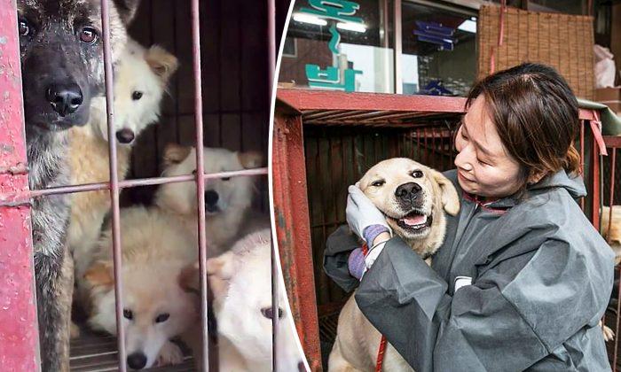 (Photo courtesy of Humane Society International)