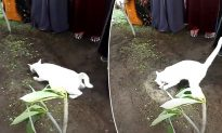 Cat Appears During Man's Funeral Acting Strangely, Then Grandson Starts Filming