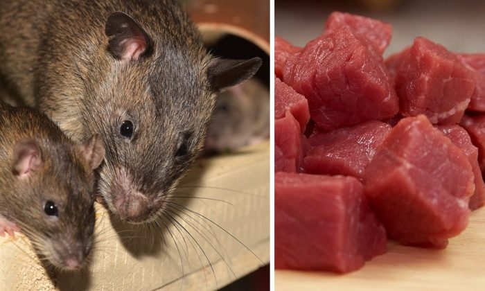 Stock image of rats and raw meat.(Sipa, PD Photos/Pixabay)