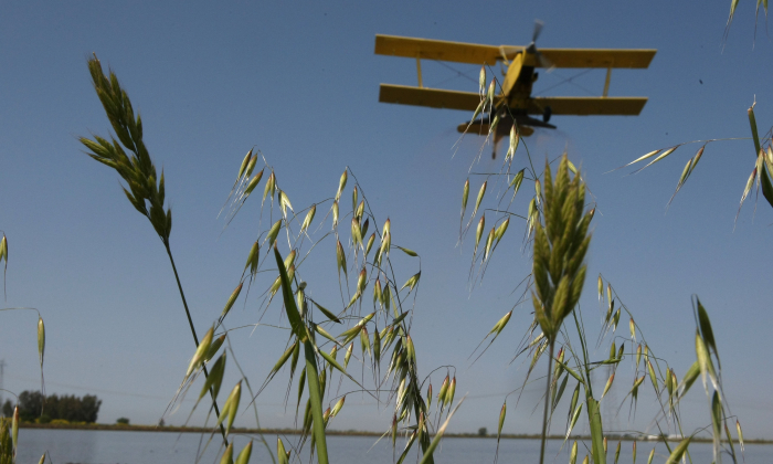 A bi-plane from Williams Ag Service flies over wild grasses as it drops rice seeds on a flooded field in Biggs, Calif. on April 25, 2008. (Justin Sullivan/Getty Images)