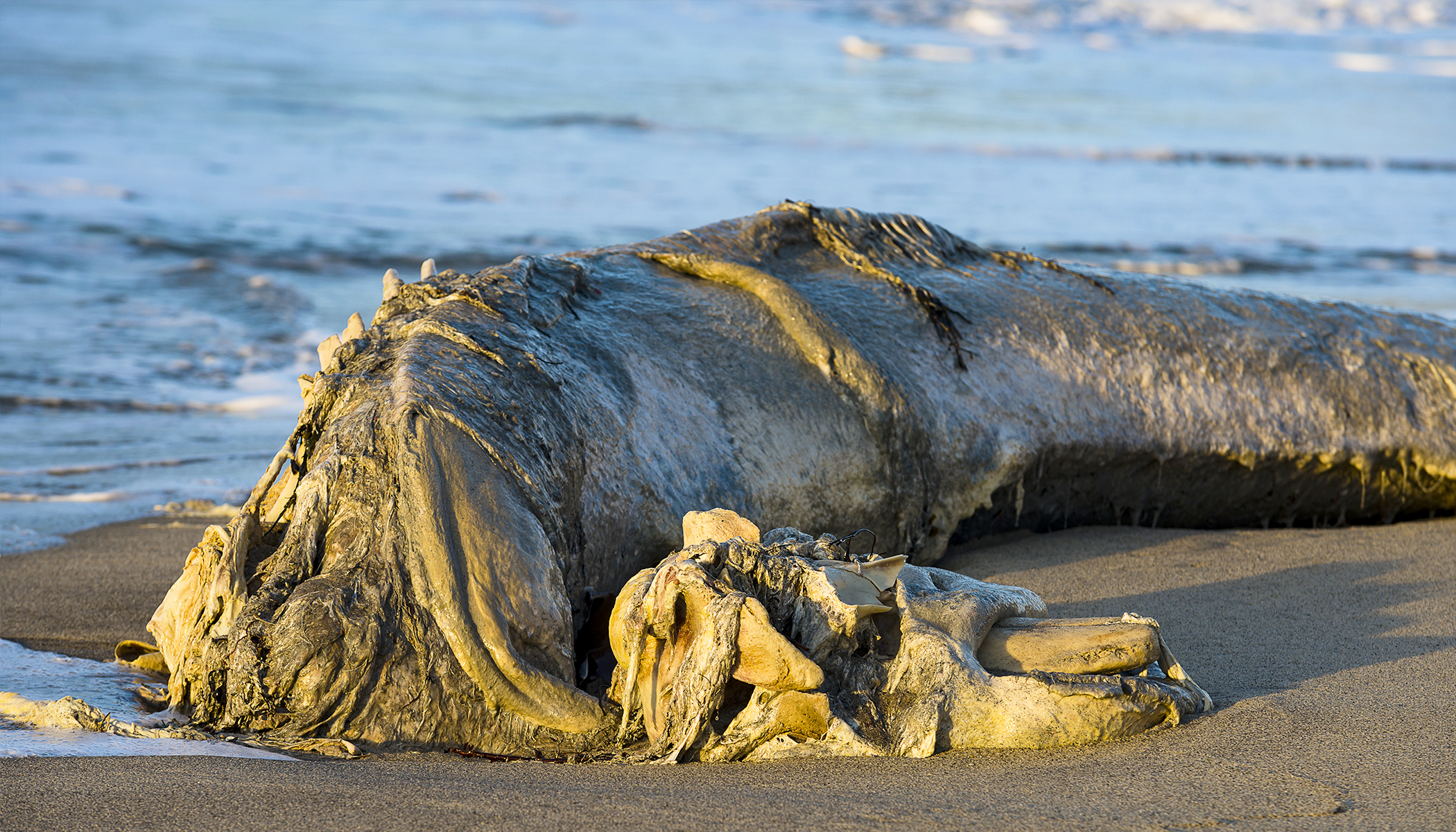 Sea Beast Washed Up on Shores, It's Like Real-Life Falkor From 'The Neverending Story'