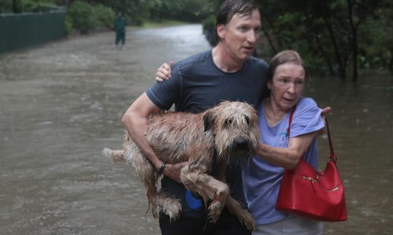 Video: Houston News Crew Rescues Dog Chained Up During Flood–Here's How He Ended Up