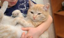 Mom Asks Son to Adopt Any Pet From Shelter, So He Picks Huge, Elderly Marmalade Cat