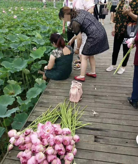 Tourists steal lotus