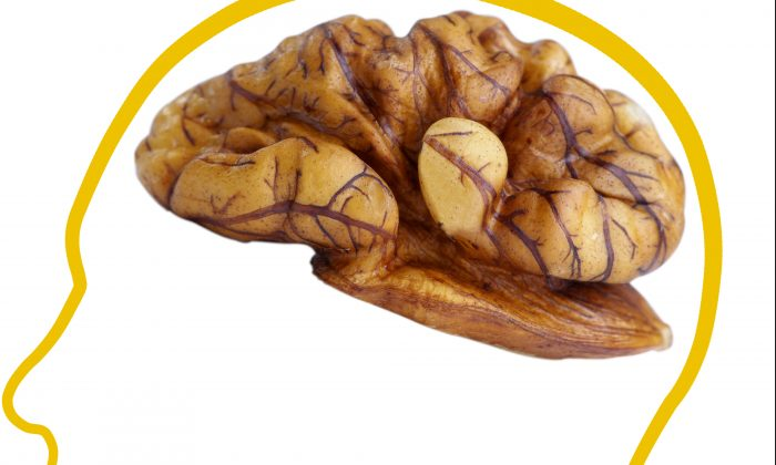 Is the walnut's cerebral shape a helpful hint from nature that it contains high amounts of the very fatty acids our brain requires? (Shutterstock)