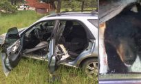 'Hit and Run' Bear at Large After Crashing a Car Into a Tree and Fleeing the Scene