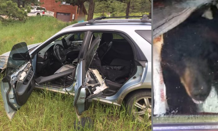 A wild bear is suspected of crashing an unlocked car at Aspen Park, Co., on July 4, 2019. (Boulder County Sheriff's Office and Colorado Parks and Wildlife)