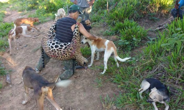 Temistocles Barbosa Freire, a dentist and alleged member of a poaching gang, is seen surrounded by hunting dogs, holding a dead jaguar. (Federal Public Prosecutor's Office)