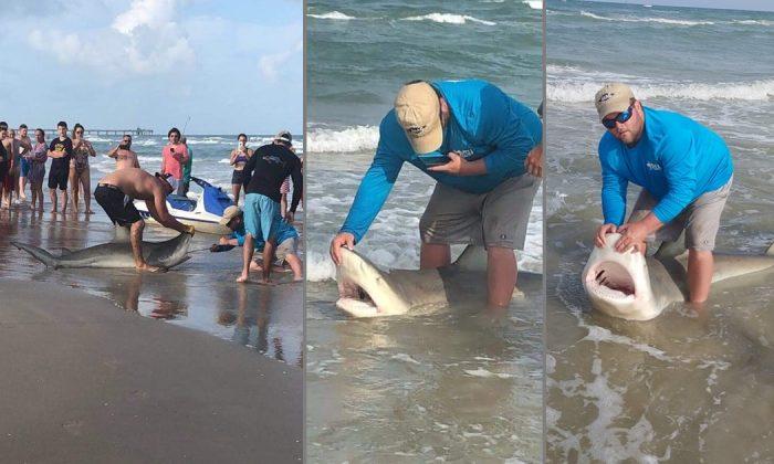 Pleasanton fishing enthusiast Jason Jenkins caught a huge bull shark at a Corpus Christi beach, Texas, on July 7, 2019. (Jason Jenkins/Facebook)