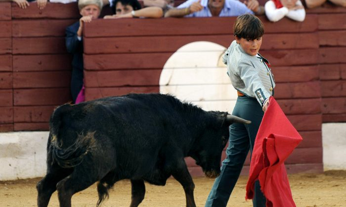 In this file image, a 10-year-old Franco-Mexican boy takes on a bull-calf in a becerrada spectacle on Aug. 6, 2008 in southwestern France.  (Jean-Pierre Muller/AFP/Getty Images)