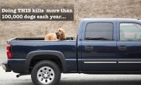 Stop Putting Your Dogs in Truck Beds, It Takes Over 100,000 Canine Lives Each Year