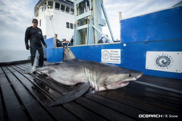 shark on ship