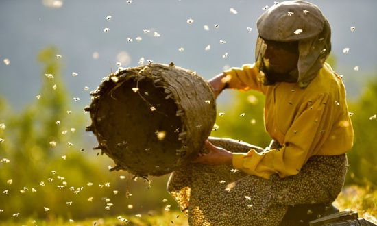 Film Review: 'Honeyland': An Eco-Doc Disguised as a Portrait of a Macedonian Beekeeper
