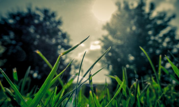 Illustration photo showing grass in a yard during sunny weather. (Unsplash)