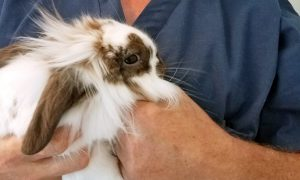 Pet Rabbit Found Swimming in a River With Rope Around its Neck