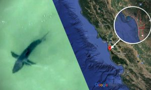 Great White Sharks Spotted Off California's Half Moon Bay, Sparking Warning