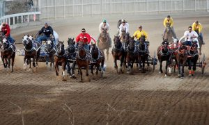 Three More Horses Euthanized in Calgary Stampede Chuckwagon Race