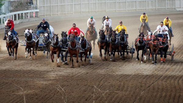 Six horses were euthanized following races at the 2019 Stampede Parade. (The Canadian Press)