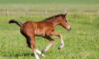 Horse Gives Birth to Rare Twins: Footage Captured Days Later Is Heartwarming