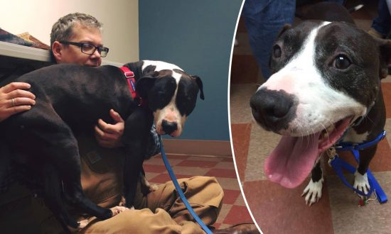 Hundreds of People Fought to Save This Dog From 'Hell'–Then Nobody Wanted Him