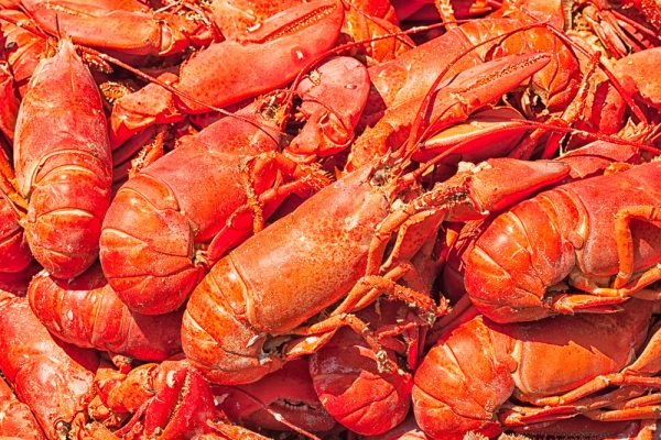 Steamed fresh lobsters