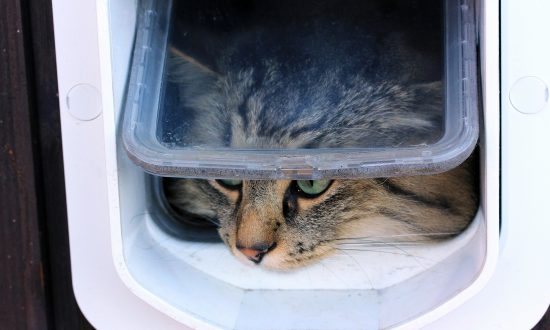 Man Spends 1.5 Hours to Build a Cat Door, but How His Kitty Walks In Is Hilarious