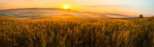 shutterstock_field_sunset