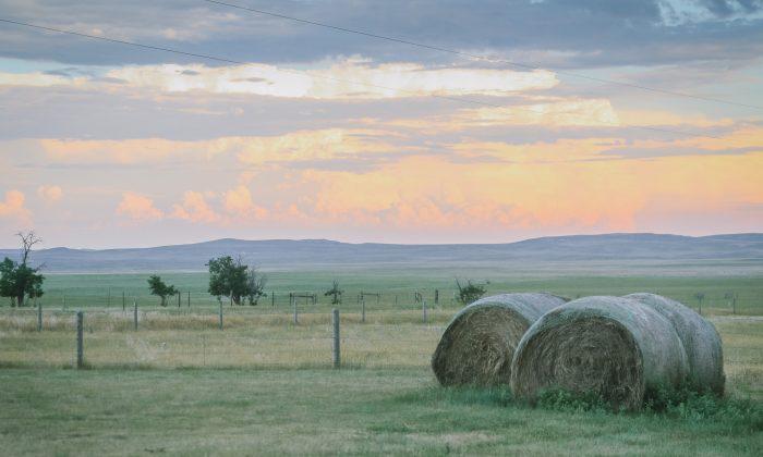 On the homestead. (Jill Winger)
