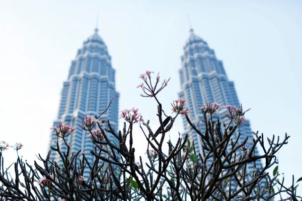 Flowers bloom in front of the Petronas Towers