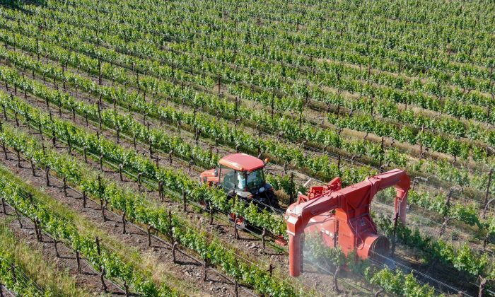 Pesticides banned in other countries for their dangerous health effects are still used—in mass quantities—in the United States.(bonandbon/Shutterstock)