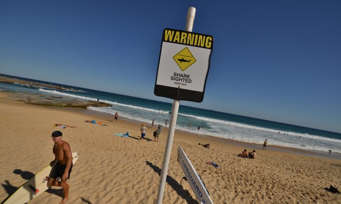 A surfer (L) comes in from the ocean after surfing despite shark warning signs posted on the beach in the northern New South Wales city of Newcastle on Jan. 17, 2015.    PETER PARKS/AFP/Getty Images)