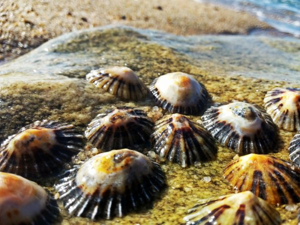 Limpets cling onto a rock