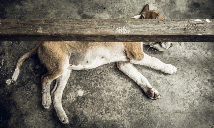 (Illustration - Shutterstock)